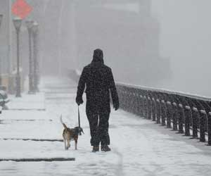 walking dog in winter in new york